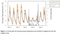 A 10 day data set showing canopy temperature and rainfall on irrigated and rain-fed sorghum crop.